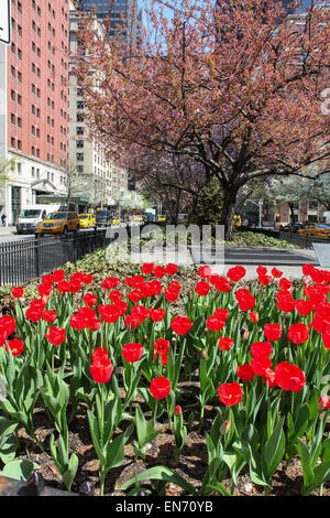 New York, NY, USA. 22 th April, 2015. Park Avenue view with tulips  in NYC seen  in New York City , USA on April - Stock Photo