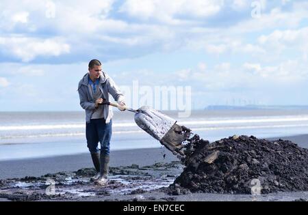 Man collecting sea-coal on Seaton Carew beach near Hartlepool, UK - Stock Photo
