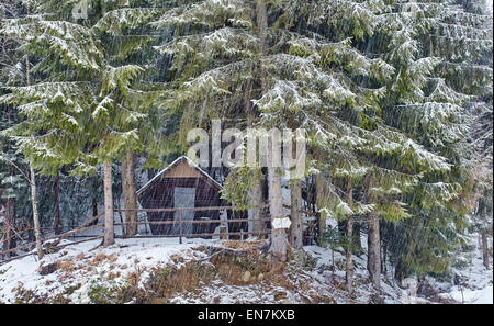 Wooden cabin in the pine forest on mountain, snowy day - Stock Photo