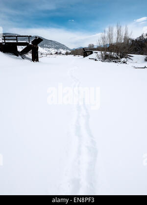 Footprints and tracks in fresh snow. - Stock Photo