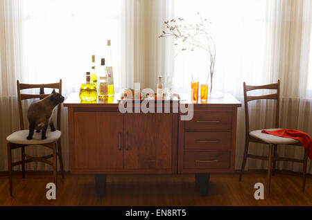 A curious cat has hopped on a chair to check out the liquor on a home bar. - Stock Photo