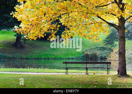 Autumn, Yellow tree and empty bench - Stock Photo