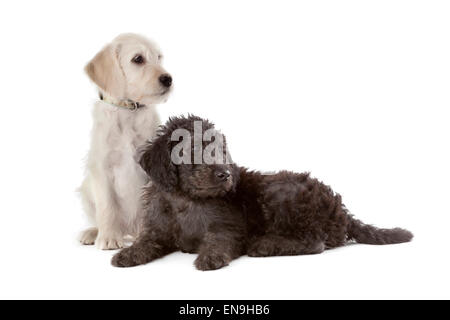 One white and one black puppy on white background - Stock Photo