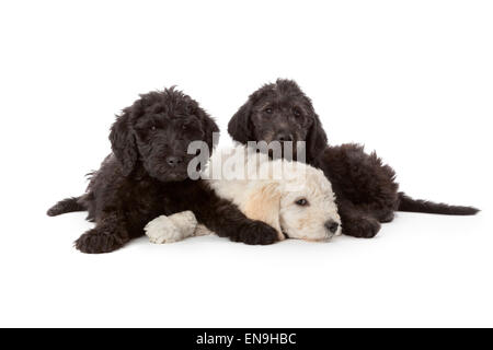 One white and two black puppies on white background - Stock Photo