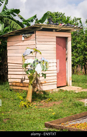 Cuba valley Valle Vinales smallholding farm privy with shoes on roof knickers pants hang on bush small tree coffee - Stock Photo