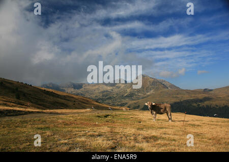 Pyrenees mountains on the France Spain border near Andorra with cow grazing in the high alpine pastures. - Stock Photo