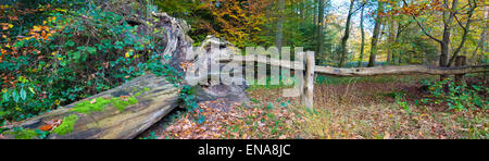 fallen tree and old wooden gate in a forest - Stock Photo