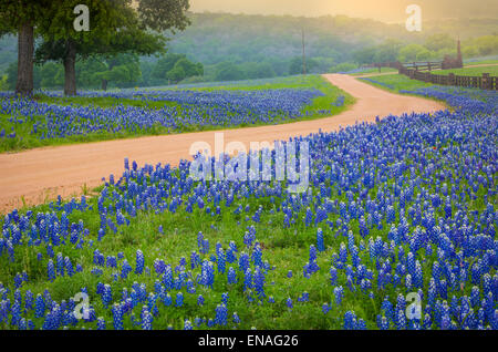 Country road in the Texas Hill Country east of Llano, Texas, line by bluebonnets - Stock Photo