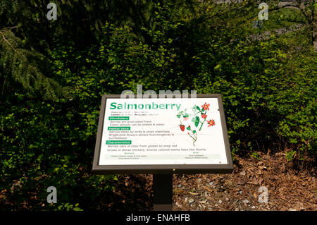 Salmonberry interpretive sign on a nature trail in the Maritime Heritage Park, Bellingham, Washington, USA - Stock Photo