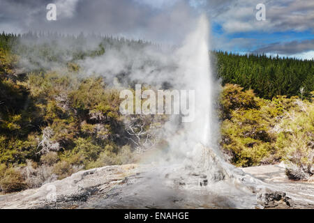 Lady Knox Geyser eruption, Waiotapu, New Zealand - Stock Photo