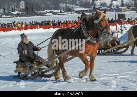 Rottach-Egern  horse-drawn sleigh race at the foot of Wallberg - Stock Photo