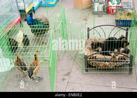 caged animlas and birds at street market, Porto, Portugal - Stock Photo