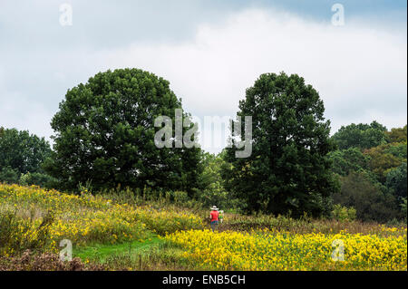 Plein air artist painting in a meadow of flowers. - Stock Photo
