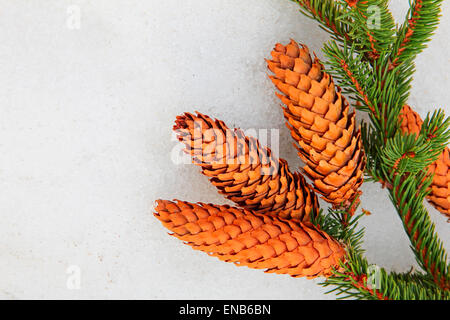 Pine branch and fir cones on white snow. - Stock Photo