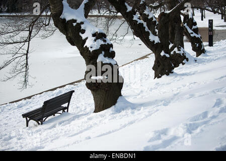 WASHINGTON DC, USA - Snow covers cherry blossom trees on the banks of the Tidal Basin in Washington DC after a winter - Stock Photo
