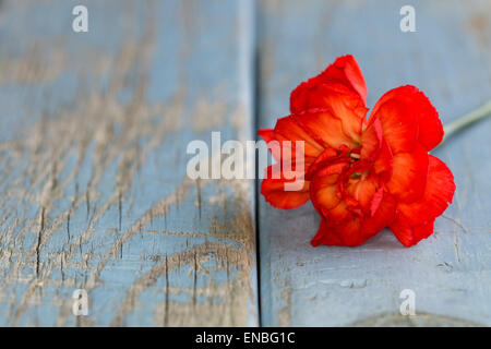 carnation on flaking paint background with copy space - Stock Photo
