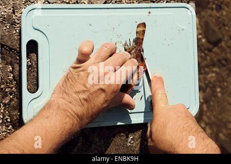 Man splits fresh sea fish Scorpaena on cutting board outdoors - Stock Photo
