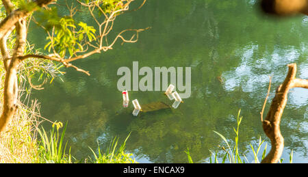 Countermeasure against increasing of alien species large mouth bass.Sayama Nature park,Higashiyamato city,Tokyo,Japan. - Stock Photo