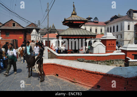 pashupatinath temple free - photo #25