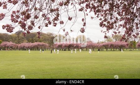 Spring cricket match being played in The Meadows public park, Edinburgh, Scotland, UK beneath Arthur's Seat - Stock Photo
