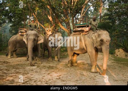 NEPAL, Royal Bardia National Park, three elephants with mahoots - Stock Photo