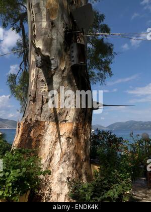 Swordfish heads nailed to a tree outside a fish taverna at karavomilos lake, Sami, Kefalonia Island, Greece. - Stock Photo