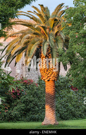 Sicily, Italy - the gardens of San Giuliano near Catania. A Canary Island date palm (Phoenix Canariensis) at sunset - Stock Photo