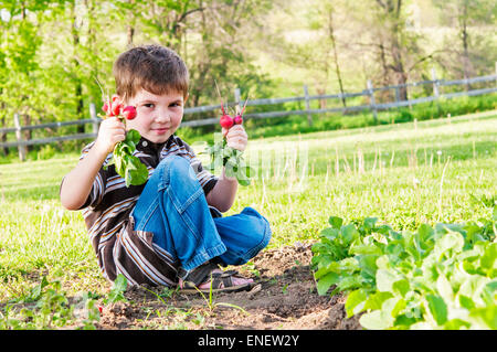 boy holding radishes pulled from garden - Stock Photo