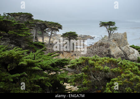 The Lone Cypress Pine on the 17-Mile Drive scenic road through Pebble Beach and Pacific Grove on the Monterey Peninsula - Stock Photo