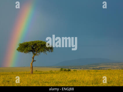 Rainbow After Rainstorm, Rift Valley Province, Maasai Mara, Kenya - Stock Photo