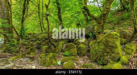 Magical forest.Hirkan National Park.Azerbaijan - Stock Photo