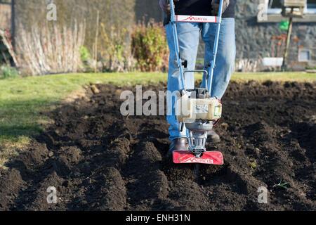 Gardener Rotavating A Vegetable Garden Preparing The Soil For Planting.  England   Stock Photo