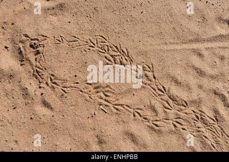 Bird Footprints in Sand, Kimberley Region, Western Australia, WA, Australia - Stock Photo