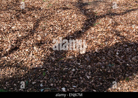 Tree shadow on dead leaves - Stock Photo
