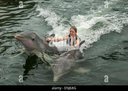 Swimming with dolphins at Dolphins Plus, a dolphin research & interaction center in Key Largo, FL. USA - Stock Photo