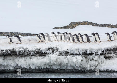 Adelie penguins (Pygoscelis adeliae) at breeding colony at Brown Bluff, Antarctica, Southern Ocean, Polar Regions - Stock Photo