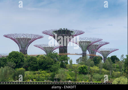 The Supertrees in the Garden By The Bay in Singapore, Southeast Asia, Asia - Stock Photo