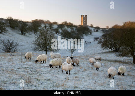 Broadway Tower and sheep in morning frost, Broadway, Cotswolds, Worcestershire, England, United Kingdom, Europe - Stock Photo