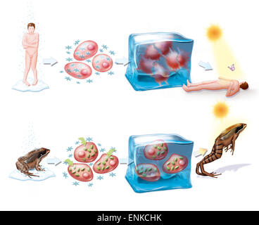 Hibernation, drawing - Stock Photo