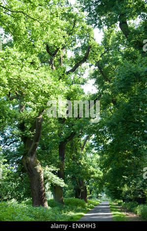 old trees near river Weser, Weserbergland, Lower Saxony, Germany - Stock Photo