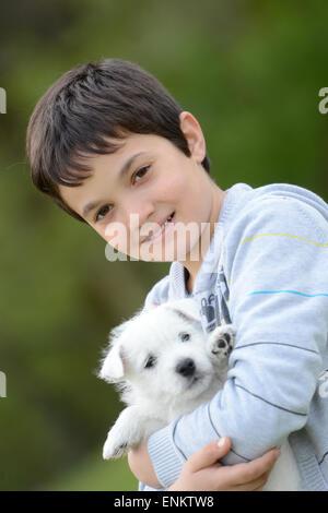 Westi Puppy - Dog West Highland Whithe - Stock Photo