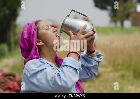 May 8, 2015 - Kathmandu, Nepal - A woman quenches her thirst during a sunny day after harvesting wheat on a field - Stock Photo