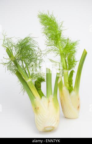 Fennel, sweet fennel, Florence fennel bulb, Fenchel, Knollen-Fenchel, Gemüse-Fenchel, Foeniculum vulgare, Foeniculum - Stock Photo