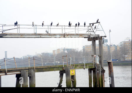 London, UK, 20 March 2015, cormorants on pier at Vauxhall on south bank of river Thames. - Stock Photo
