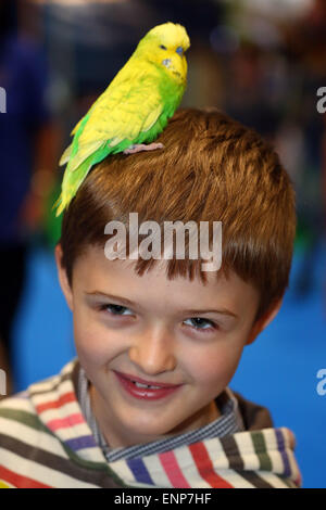 London, UK. 9th May 2015. Max from London celebrates his 8th birthday with Eric the Budgerigar on the Budgerigar - Stock Photo
