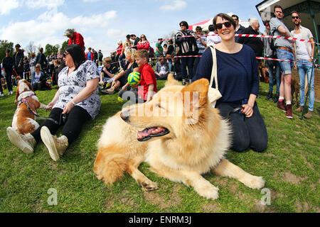 London, UK. 10th May 2015. All Dogs Matter Great Hampstead Bark Off Dog Show 2015, Hampstead Heath, London in aid - Stock Photo