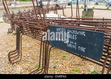 Oyster Ongrowing Tables for Whitstable Oyster Beds Whitstable Kent - Stock Photo