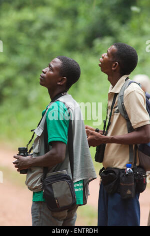 Bird Guides;  Judicious use of playback bird calls, may bring in closer wild birds of the same species. Ghana. West - Stock Photo