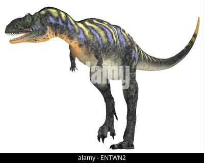 Aucasaurus was a carnivorous dinosaur that lived in the Cretaceous Period of Argentina, South America. - Stock Photo