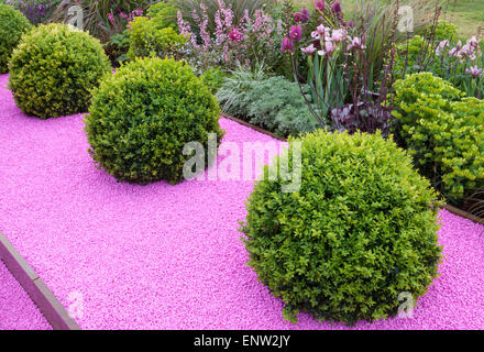 Buxus sempervirens box balls rhs malvern spring show for Pip probert garden designer